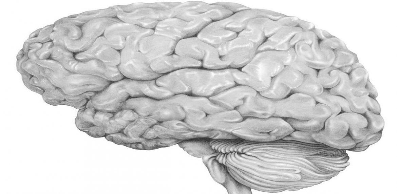 بهترین متخصص میگرن علت بروز بیماری التهاب مغز را بشناسید !